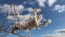 花卉树枝天空视频