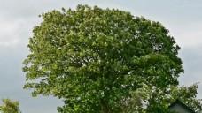 实拍树木树枝视频