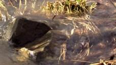 石头水元素视频