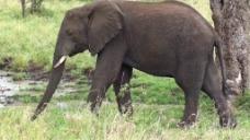 大象自然视频素材