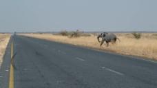 大自然保护区大象视频
