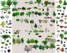 绿植效果图元素