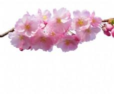梦幻粉色花朵元素