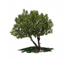 手绘绿荫大树元素