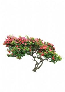 手绘花朵大树元素