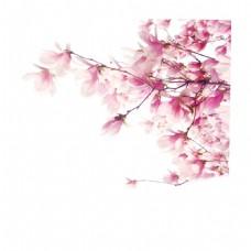 浪漫粉色花朵元素