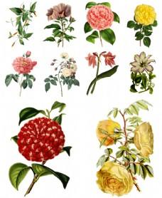 盛开花朵的插画