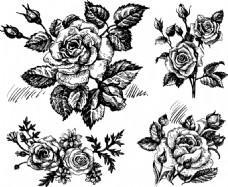 素描手绘黑白玫瑰花插画