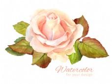 水彩绘粉色玫瑰花插画