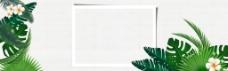 淘宝首页背景模板素材绿植PSD下载