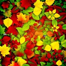 秋天叶子矢量素材
