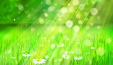 阳光照射的绿色草地背景
