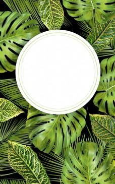 绿色龟背竹植物背景