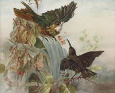 蜂鸟油画装饰画素材
