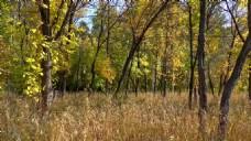 树木树枝视频素材
