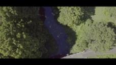 大自然航拍树木视频