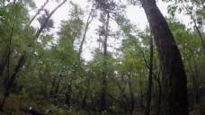 自然树林风景视频