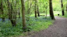森林树木风景视频素材