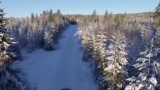 大自然森林雪景视频