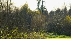 自然风景植物视频素材