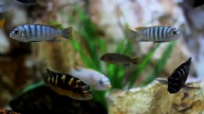 观赏鱼类视频素材