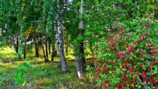 树木丛林视频