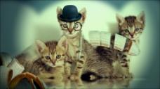 宠物猫咪视频素材