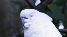 鹦鹉头部视频素材