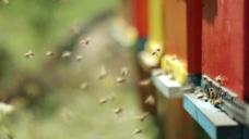 蜜蜂蜂箱视频素材