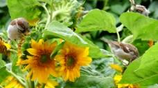 野外黄色花卉视频背景