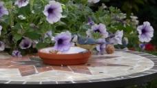 花园花卉视频背景