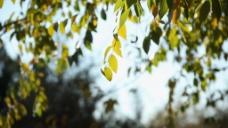 树枝风景视频素材