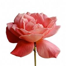 梦幻花瓣花朵元素