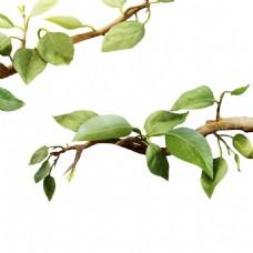 绿色清新树叶元素