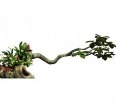植物大树枯木元素