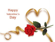 红色玫瑰飘带情人节卡片矢量素材