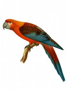 手绘彩色鹦鹉元素
