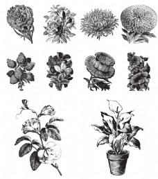 黑白手绘花卉插画