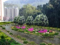 河道改造景观绿化效果图