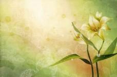 手绘百合花背景墙