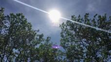 阳光树木视频素材