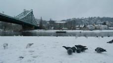 雪景风景视频素材