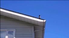 建筑蓝色天空视频