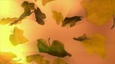 树叶树枝视频素材