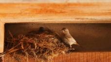 实拍鸟巢视频素材