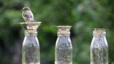 鸟儿瓶子视频素材