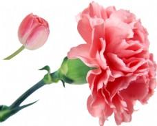 小清新花朵元素