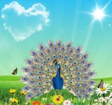 花丛中的孔雀