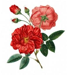 手绘红色花朵元素