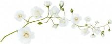 手绘白色花朵元素